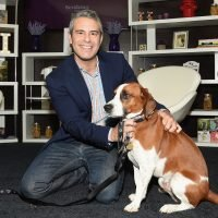 Andy Cohen Was Dad-Shamed for the Silliest Reason