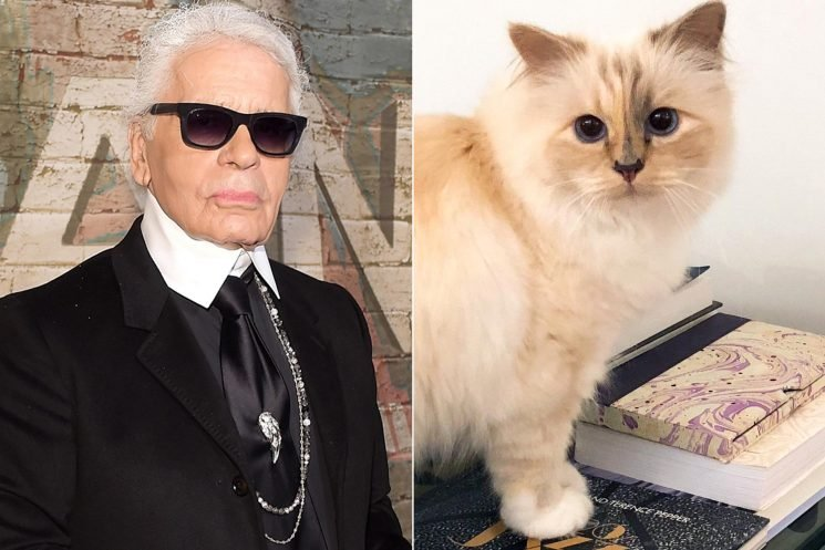 What's Next For Karl Lagerfeld's Cat Choupette: 'She Is Choosing to Put Her Best Paw Forward'