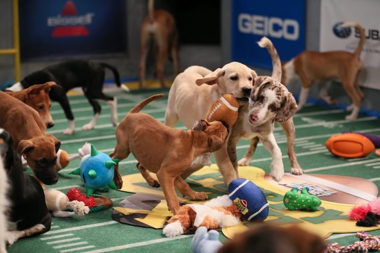 Why 'Puppy Bowl 2019' is cute but senior dogs are the best