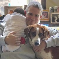 Andy Cohen Reacts to Critics After Dog Destroys Son's Toy