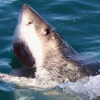 Shark attacks doubled in 20 years in highly populated areas, study finds