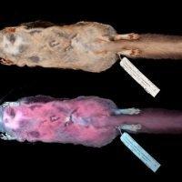 Hot pink flying squirrels? Wisconsin biologist shocked to find creatures glow in the dark