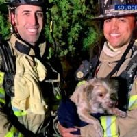 Firefighters revive unresponsive dog with CPR after pooch pulled from house fire