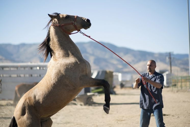 Horse Drama 'Mustang' Sprints Ahead of Star-Crossed 'The Aftermath'