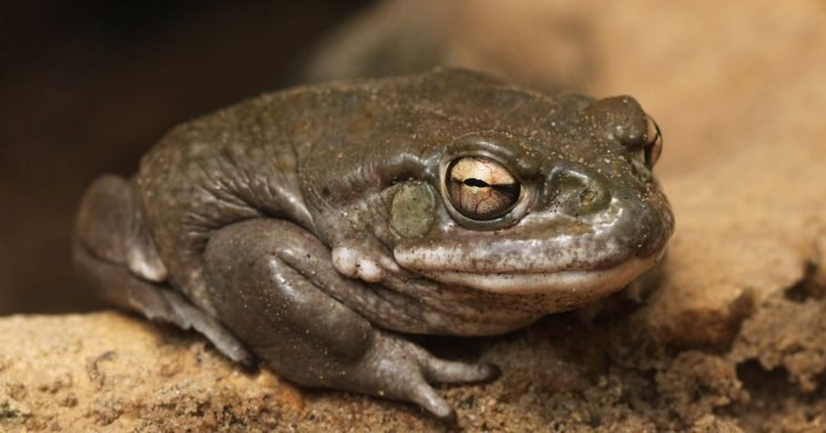 Psychedelic found in toad venom could be used to treat depression and anxiety