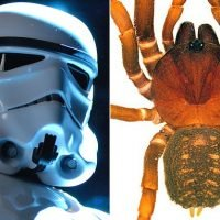 Meet the stormtrooper SPIDERS