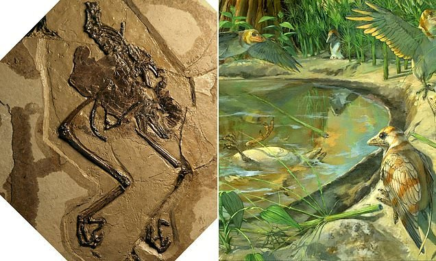 Bird that died 110-million-years-ago found with an egg inside it