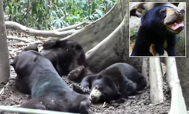 Bears communicate by mimicking each other's facial expressions