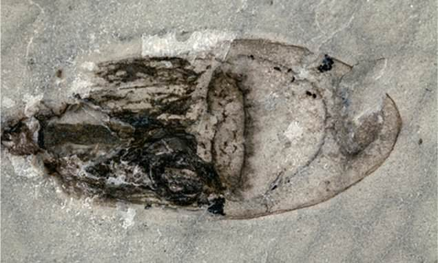 Thousands of undiscovered fossils found in China