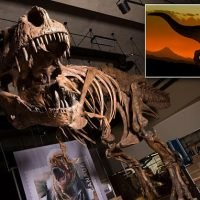World's biggest T. Rex weighed more than 19,000 lbs finds new study