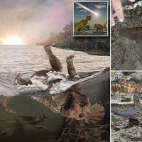 'Fossil graveyard' reveals the fate of dinosaurs after the asteroid