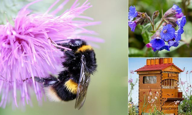 The Mail on Sunday reveals how you can save the Great British bee