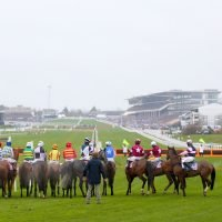 Cheltenham 5.30 racecard: Runners and riders for the Martin Pipe Handicap Hurdle today