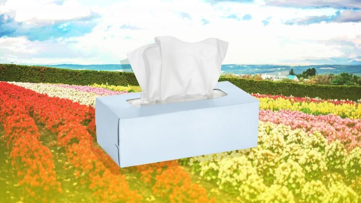 Stop Sniffling with These Spring Allergies Solutions