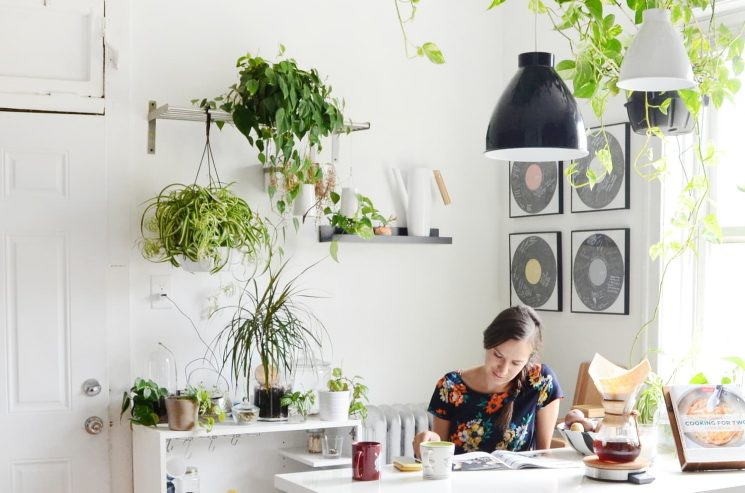 How to Stop Killing Your Plants, According to the Plant Doctor