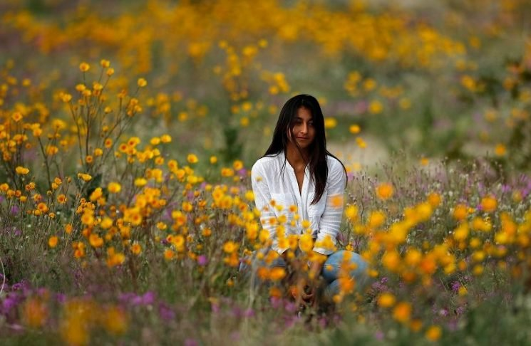 'Super bloom' covers California desert in colorful wildflowers