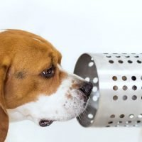 Dogs can smell cancer in blood with 97% accuracy, study reveals
