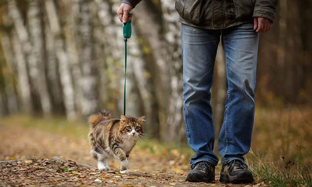 Outdoor cats three times more likely to carry infections