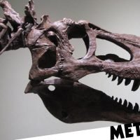 Man puts 68-million-year old T-Rex fossil on eBay