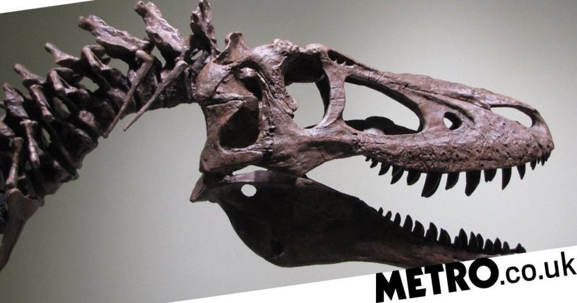 Man puts 68-million-year old T-Rex fossil on eBay