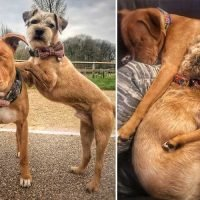 Blind pooch Amos has his own guide dog who never leaves his side and protects him from nasty mutts