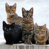 Cats recognize their own names – as study reveals dog-like ability to understand us