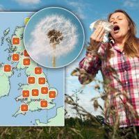 Pollen count warning: Hay fever sufferers at risk – where is the forecast highest?