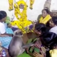 Adorable moment monkey comforts grieving woman at funeral